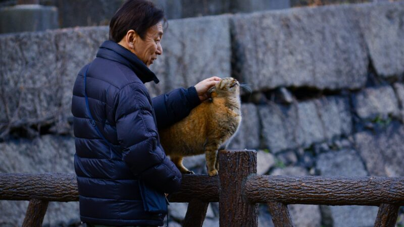 Japan can't solve the aging issue